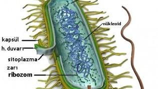 Antibiyotik: Nasıl ve neden kullanılır