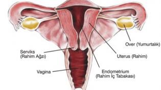 Kadın Sağlığı: Rahim Kanseri