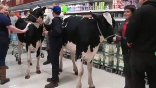 Çiftçiler Süt Fiyatlarının Düşüklüğünü Protesto Ediyorlar